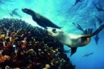 26. Cape Town Oudekraal 2 Seals at Strawberry rocks Guido Zsilavecz copy