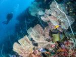 38. Diving the magnificent house reef at Azura Quilalea in the QuirimbasAQ3156_1Claudia_Pellarini copy (1)